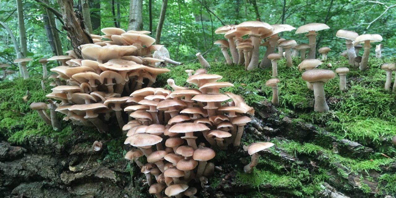 The Fungi Factor.